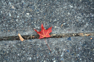 Leaf stuck in concrete.