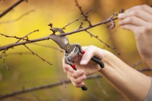 Pruning branches